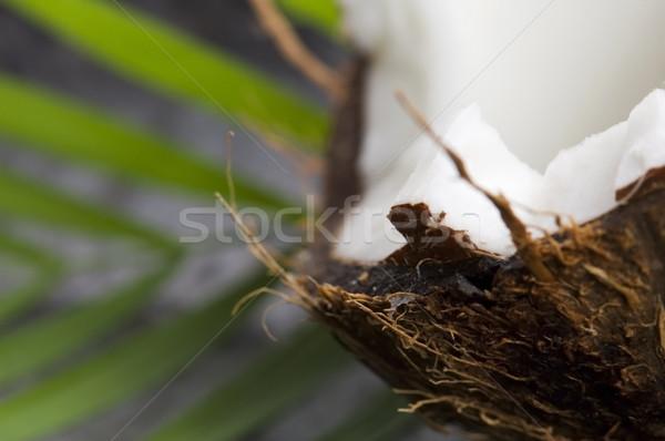Cocotier feuille exotique scène été usine Photo stock © joannawnuk