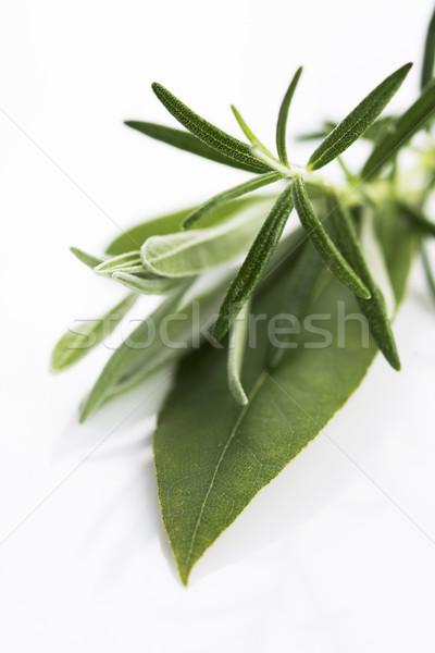 Fresh green herbs on white background Stock photo © joannawnuk