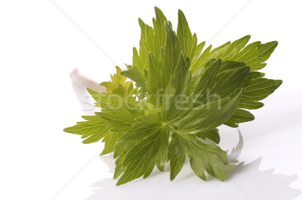 fresh herbs. lovage Stock photo © joannawnuk