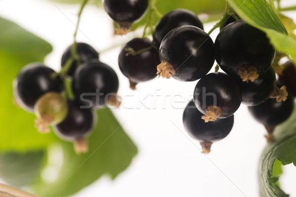 Blackcurrant fruit full of vitamins Stock photo © joannawnuk