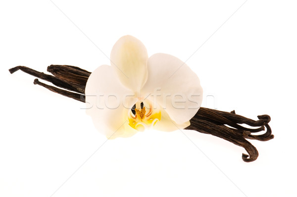 Vanilla pods and flower Stock photo © joannawnuk