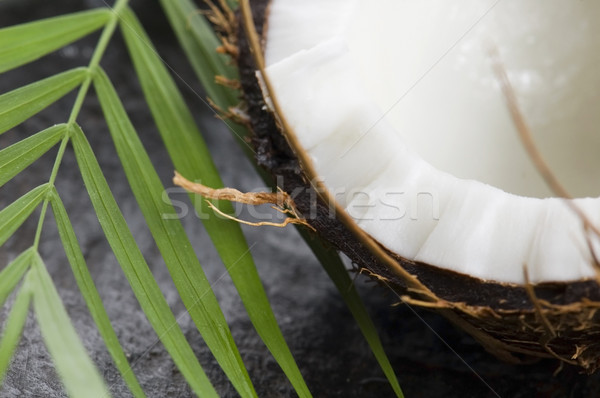 Kókuszpálma levél egzotikus jelenet nyár növény Stock fotó © joannawnuk