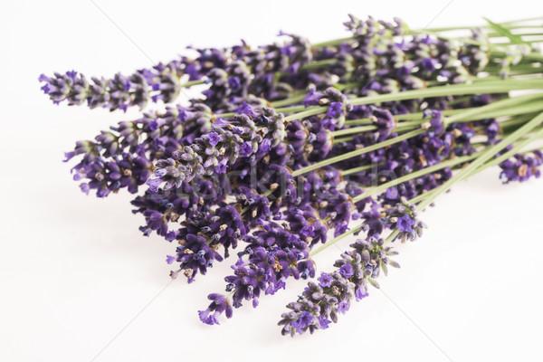 Foto stock: Lavanda · flor · natureza · verão · Óleo · planta