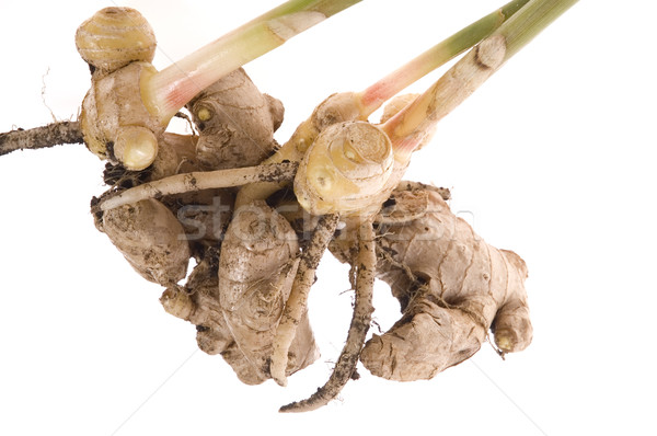 fresh ginger root. plant Stock photo © joannawnuk