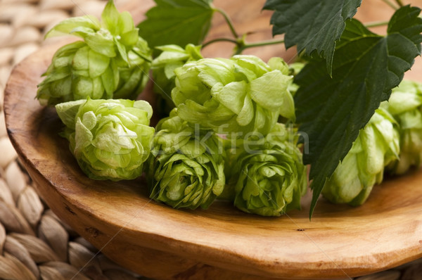 Stock photo: Hop cone and leaves