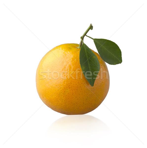 Orange Früchte voll Zutaten isoliert Blatt Anlage Stock foto © JohnKasawa