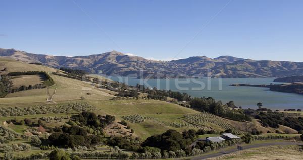 Beautiful dairy farmland scenery on the top mountain Akaroa town Stock photo © JohnKasawa