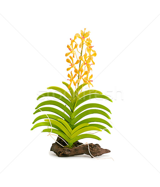 Artificial orchid wild flower isolated on white background  Stock photo © JohnKasawa