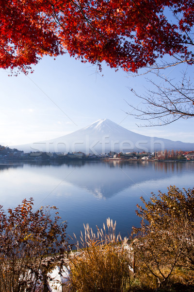 Beautiful scenery landscape of Mountain Fuji in autumn Kawaguchi, Japan Stock photo © JohnKasawa