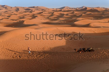 Camels at the dunes, Morocco, Sahara Desert Stock photo © johnnychaos