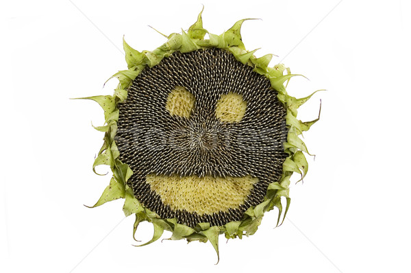 Happy sunflower isolated Stock photo © johnnychaos