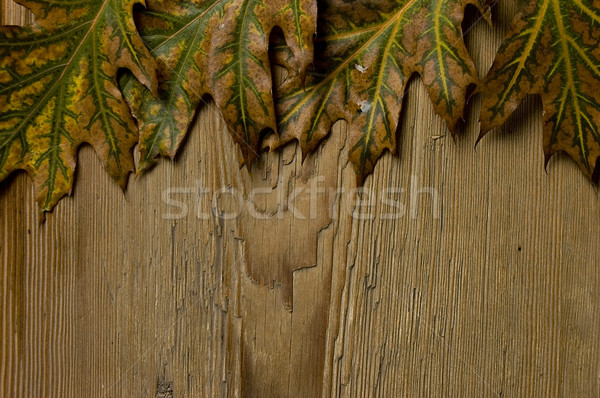 autumn frame Stock photo © johnnychaos