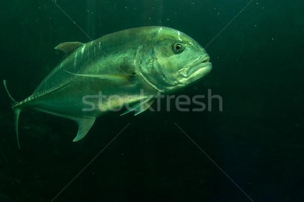 Tropische vissen onderwater foto natuur schoonheid Stockfoto © johnnychaos