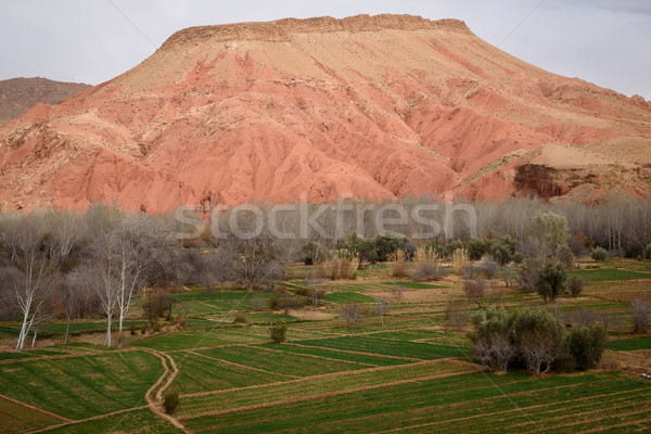 Cênico paisagem atlas montanhas Marrocos Foto stock © johnnychaos