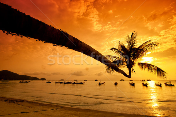 Stockfoto: Zonsondergang · palm · boten · tropisch · strand · eiland · Thailand