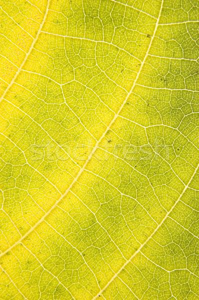 Macro folha tiro colorido outono abstrato Foto stock © johnnychaos