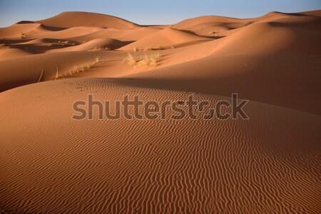 Fas sahara çöl kum gökyüzü güneş Stok fotoğraf © johnnychaos