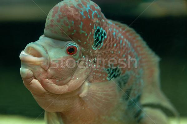тропические рыбы подводного фото природы красоту Сток-фото © johnnychaos