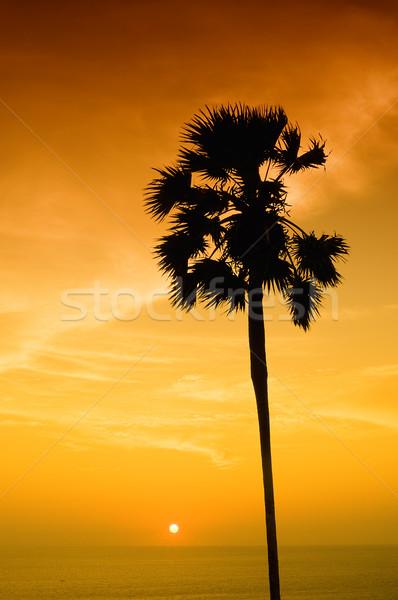 Zonsondergang palm eiland Thailand boom wolken Stockfoto © johnnychaos