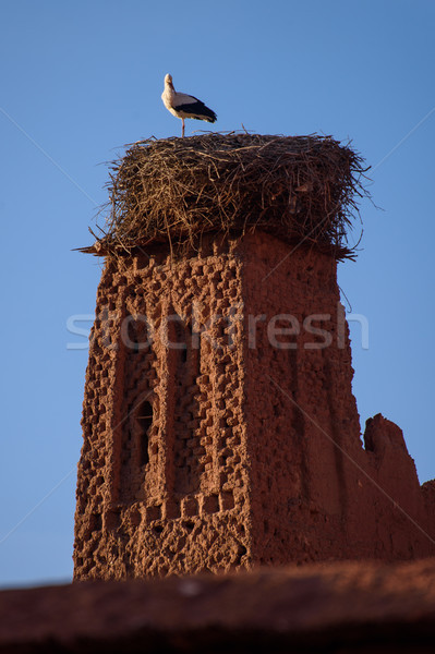 Stock photo: Stork on the old kasbah tower, Morocco.