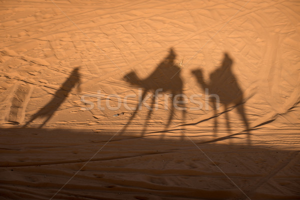 Chameau ombres sahara désert sable Maroc Photo stock © johnnychaos