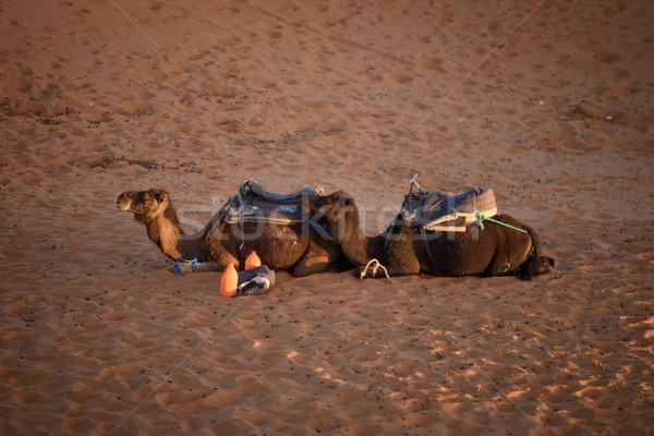Kamelen Marokko sahara woestijn zand hemel Stockfoto © johnnychaos
