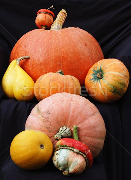 Autumn pumpkin composition Stock photo © johnnychaos