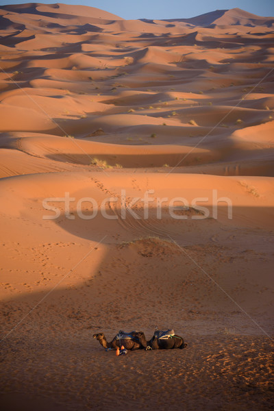 Tevék Marokkó Szahara sivatag homok égbolt Stock fotó © johnnychaos