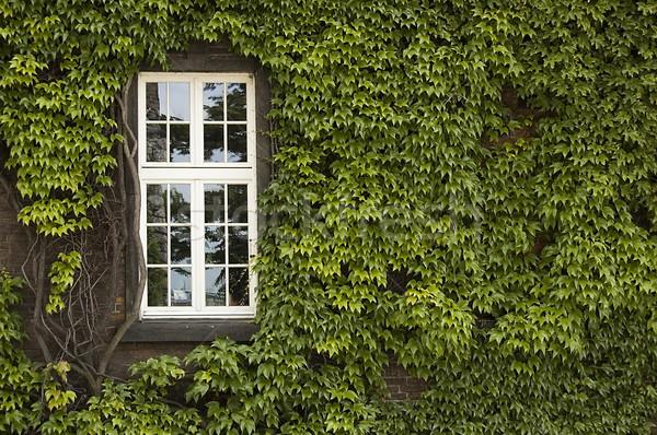 Fenêtre lierre vert couvert mur bâtiment Photo stock © johnnychaos