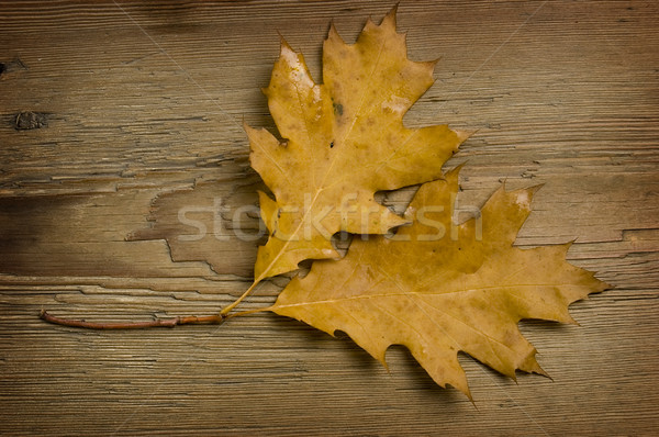 autumn leaf over old board Stock photo © johnnychaos