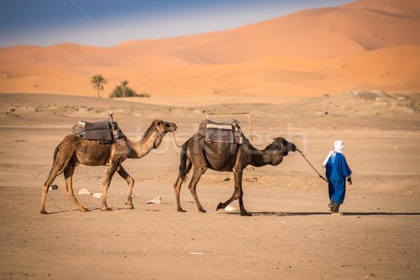 Berber man leading caravan, Hassilabied, Sahara Desert, Morocco Stock photo © johnnychaos