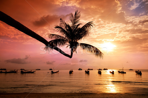 Sunset with palm and boats on tropical beach Stock photo © johnnychaos