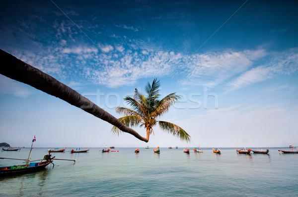 Palm boten tropisch strand Thailand eiland boom Stockfoto © johnnychaos