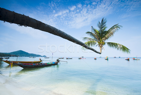 palm and boats on tropical beach Stock photo © johnnychaos
