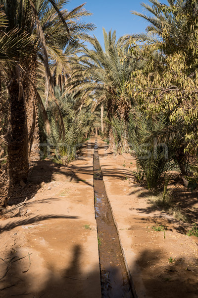 Oasis in Hassilabied, Erg Chebbi, Moroco Stock photo © johnnychaos