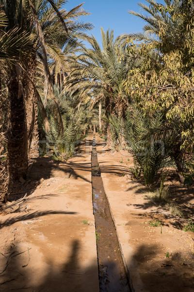 オアシス 村 庭園 サハラ砂漠 砂漠 太陽 ストックフォト © johnnychaos