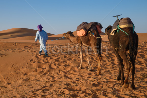 Berber man leading caravan, Hassilabied, Sahara Desert, Morocco Stock photo © johnnychaos