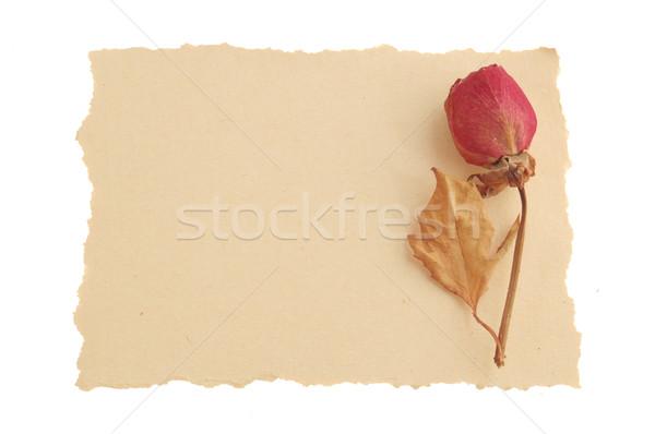 Vintage amour un message sécher rose grunge Photo stock © johnnychaos