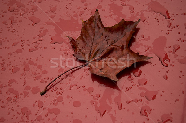 autumn leaf over red metalic surface Stock photo © johnnychaos