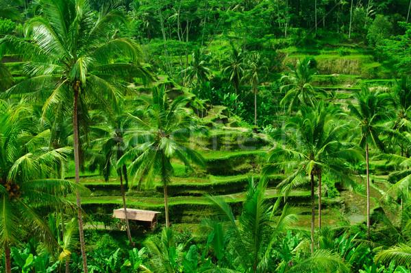 Terras rijst velden bali Indonesië mooie Stockfoto © johnnychaos