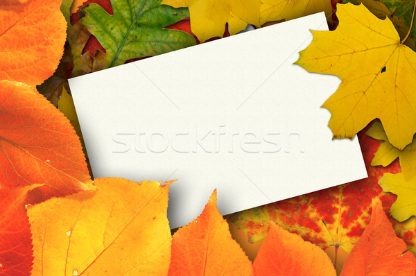 ősz kártya üres kártya gyönyörű őszi levelek papír Stock fotó © johnnychaos