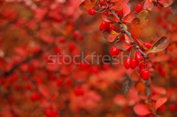 Hojas de otoño dorado otono madera forestales fondo Foto stock © johnnychaos