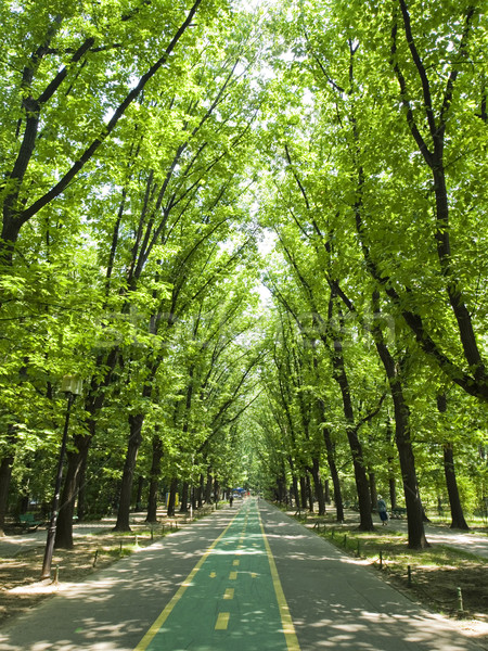 Road in forest  Stock photo © johny007pan
