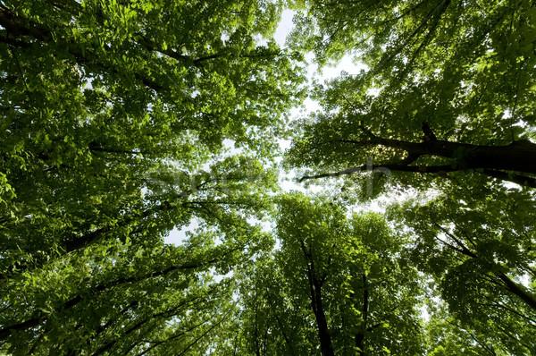 Vert été arbres large up vue Photo stock © johny007pan