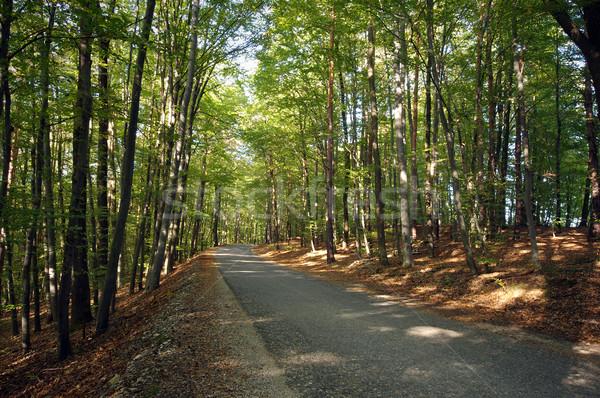 Route forêt arbres Slovénie nature Photo stock © johny007pan