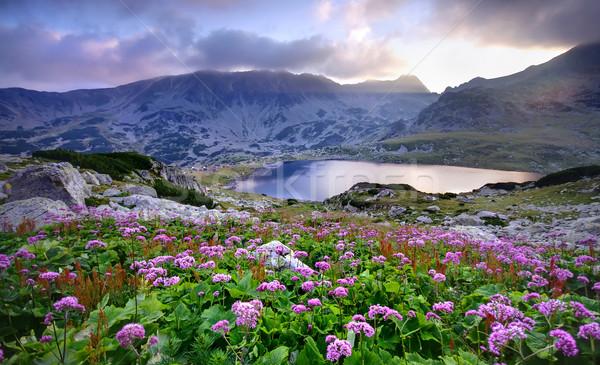 Lac montagne fleurs parc Roumanie printemps Photo stock © johny007pan