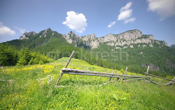 Montagne paysage été Roumanie fleurs bois Photo stock © johny007pan