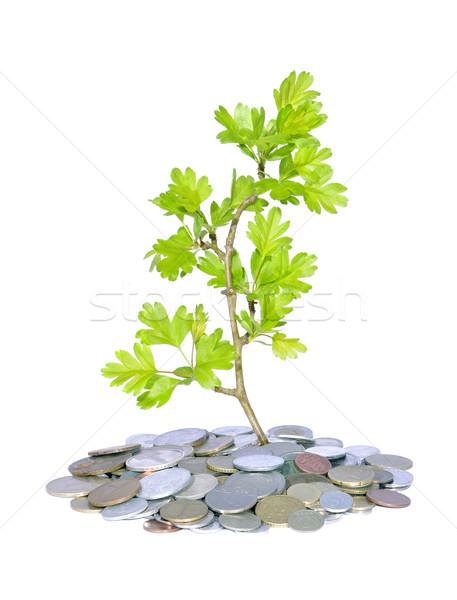 Vert usine argent résumé pièces fraîches Photo stock © johny007pan