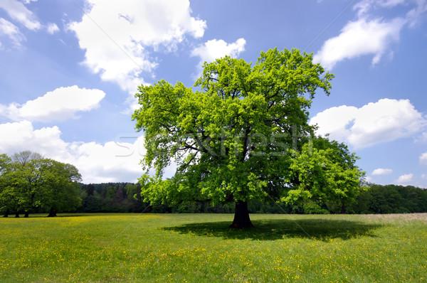 Arbre nature vert fraîches été herbe Photo stock © johny007pan