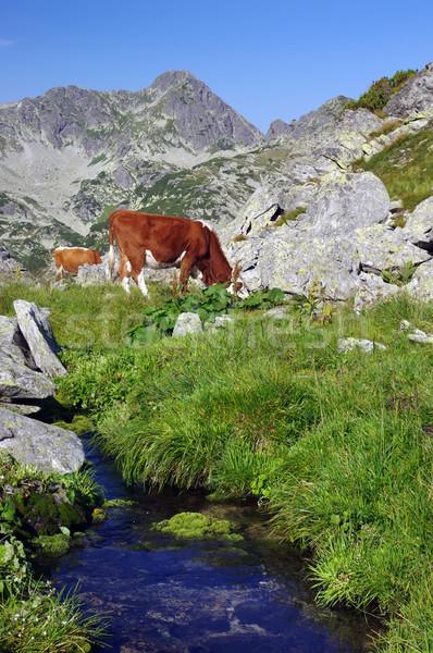 Vache alpine été montagne eau Photo stock © johny007pan